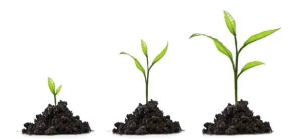 WS+B Professional Growth